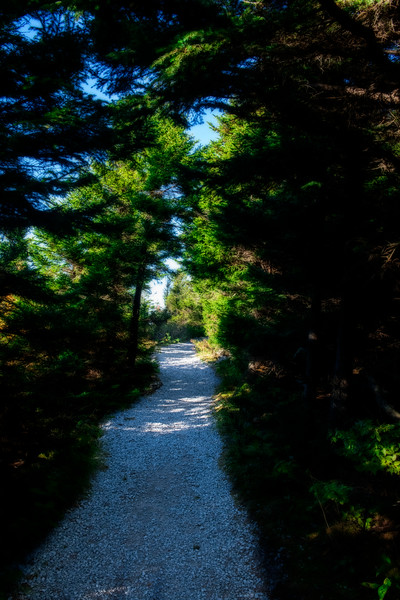 Trail at Spruce Knob mountain
