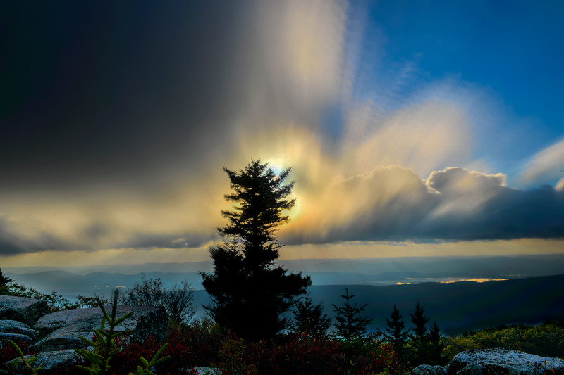 Big sky behind the pine tree in the morning in the mountains