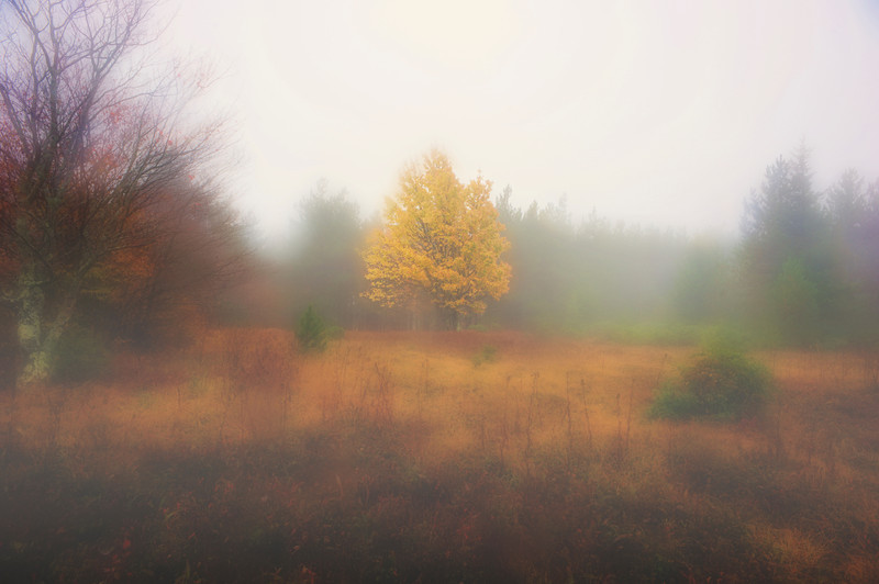 """Yellow leaves of tree in fog at Dolly Sods<br /> <br /> to purchase - <a href=""""http://dan-friend.artistwebsites.com/featured/yellow-leaves-of-tree-in-fog-at-dolly-sods-dan-friend.html"""">http://dan-friend.artistwebsites.com/featured/yellow-leaves-of-tree-in-fog-at-dolly-sods-dan-friend.html</a>                                                             .............................................pixel paintography"""