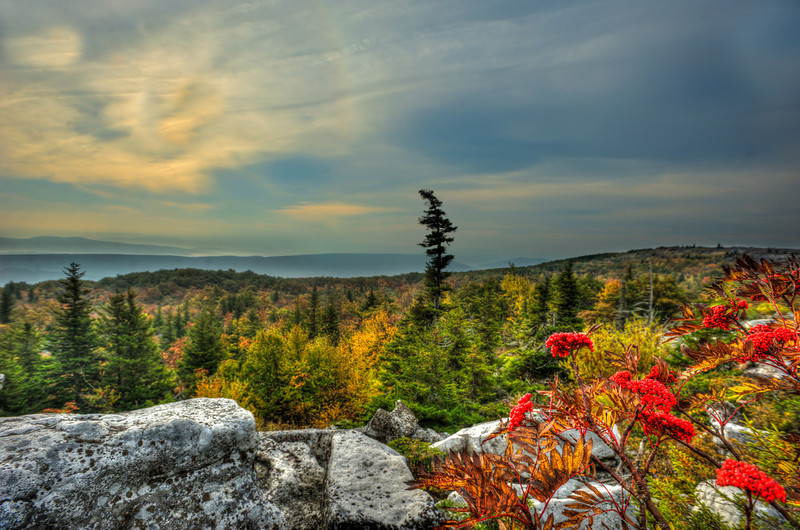 """red berries at Bear Rock in Dolly Sods<br /> <br /> to purchase - <a href=""""http://dan-friend.artistwebsites.com/featured/red-berries-at-bear-rock-in-dolly-sods-dan-friend.html?newartwork=true"""">http://dan-friend.artistwebsites.com/featured/red-berries-at-bear-rock-in-dolly-sods-dan-friend.html?newartwork=true</a>                                                             .............................................pixel paintography"""