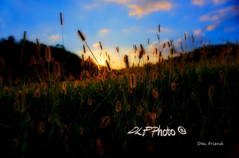 """Grass in field at sunset<br /> <br /> Framed, metal, canvas order at this website - <a href=""""http://dan-friend.artistwebsites.com/featured/grass-in-field-at-sunset-dan-friend.html"""">http://dan-friend.artistwebsites.com/featured/grass-in-field-at-sunset-dan-friend.html</a>                                                             .............................................pixel paintography"""