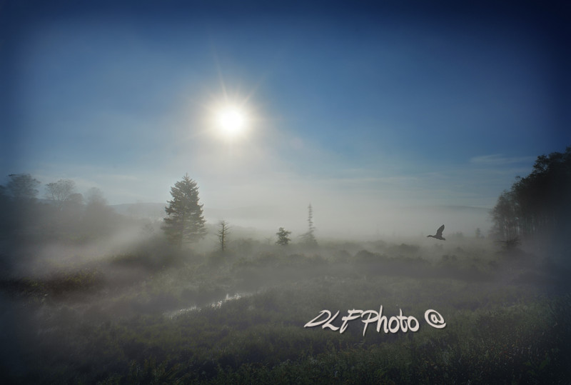 """Early morning fog at Canaan Valley<br /> <br /> To purchase - <a href=""""http://dan-friend.artistwebsites.com/featured/early-morning-fog-at-canaan-valley-dan-friend.html?newartwork=true"""">http://dan-friend.artistwebsites.com/featured/early-morning-fog-at-canaan-valley-dan-friend.html?newartwork=true</a>                                                             .............................................pixel paintography"""