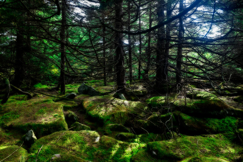 Moss covered rocks top on spruce Knob mountain
