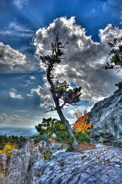 Weather ravaged tree top of mountain ...........................................Prints or digital files can be purchased by e mailing DFriend150@gmail.com