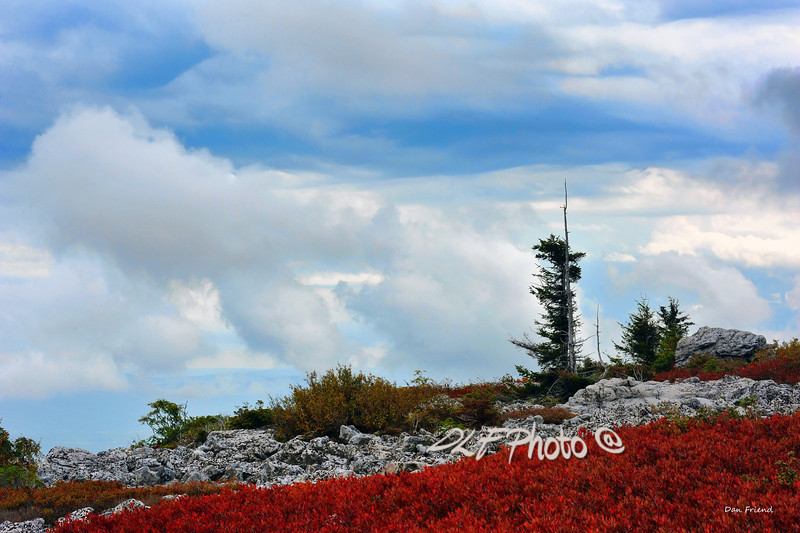 """Nice Day At Dolly Sods<br /> <br /> order at this website - ....................................................................... <a href=""""http://dan-friend.artistwebsites.com/featured/wind-swept-mountain-top-dan-friend.html.....................pixel"""">http://dan-friend.artistwebsites.com/featured/wind-swept-mountain-top-dan-friend.html.....................pixel</a> paintography"""