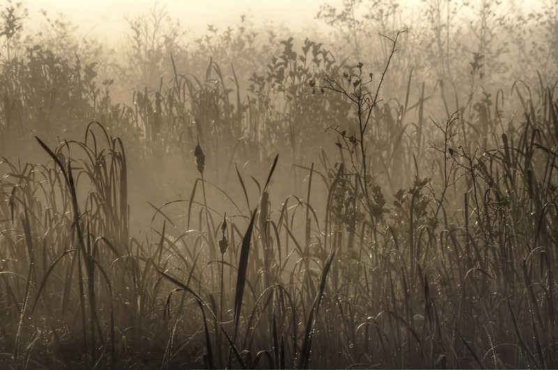Early morning mist cattails Canaan Valley ...........................................Prints or digital files can be purchased by e mailing DFriend150@gmail.com