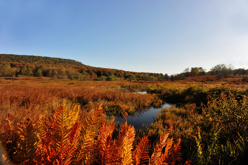 Beautiful clear crisp fall day Canaan Valley ...........................................Prints or digital files can be purchased by e mailing DFriend150@gmail.com