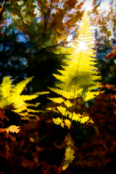 Fern design in the sun .......  paintography