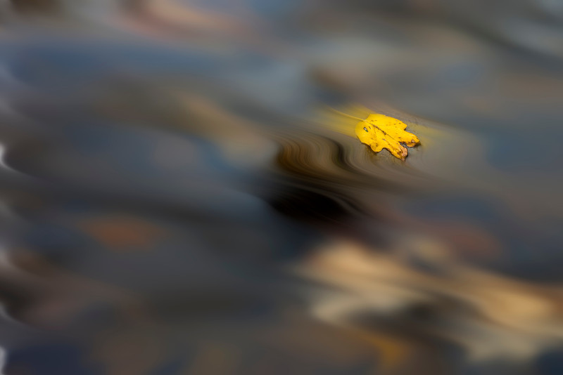 "Yellow leaf floating in water<br /> <br /> to purchase - <a href=""http://dan-friend.artistwebsites.com/featured/yellow-leaf-floating-in-water-dan-friend.html"">http://dan-friend.artistwebsites.com/featured/yellow-leaf-floating-in-water-dan-friend.html</a>                                                             .............................................pixel paintography"