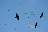 Buzzards circling.................       Prints or digital files can be purchased by e mailing DFriend150@gmail.com