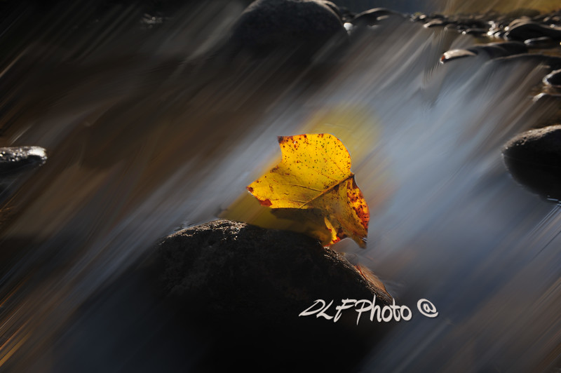 Fall leaf in the water