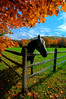 Horse under tree by fence ...........................................Prints or digital files can be purchased by e mailing DFriend150@gmail.com