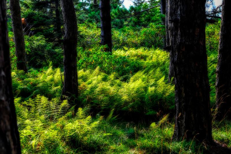 Green ferns in sunlight