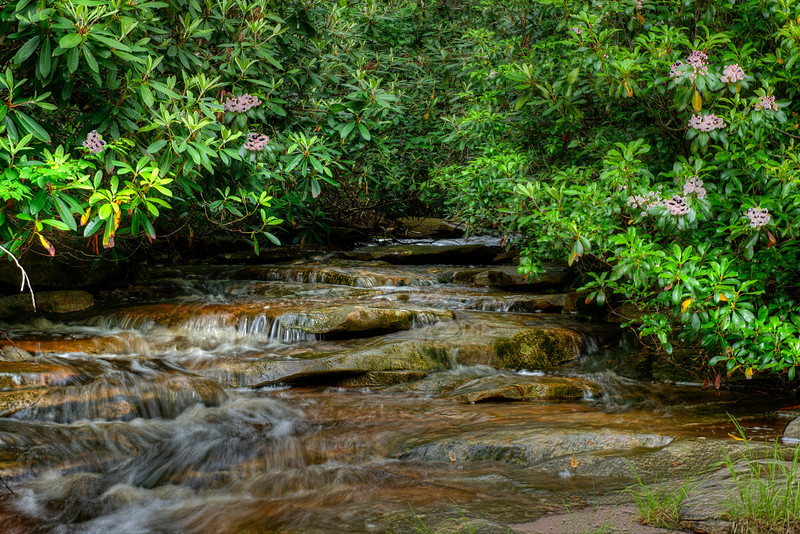 Small stream in West Virginia with Mountain Laurel.................................Prints or digital files can be purchased by e mailing DFriend150@gmail.com
