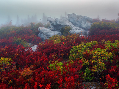 Dolly Sods - 1
