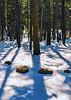 Stones in Snow