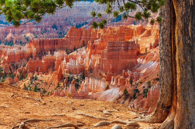 UT-BRYCE CANYON NATIONAL PARK-SUNRISE POINT