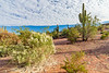 ARIZONA-Phoenix-Pagago Park-Desert Botanical Garden-Saguaro cactus
