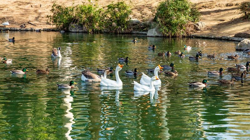 California-Inglewood-Kenneth Hahn Lower Park-Blue Lagoon