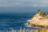 CA-POINT LOBOS STATE PRESERVE