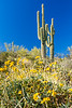 ARIZONA-Black City Canyon-Saguaro cactus