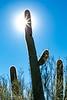 ARIZONA-Black City Canyon-Saguaro cactus