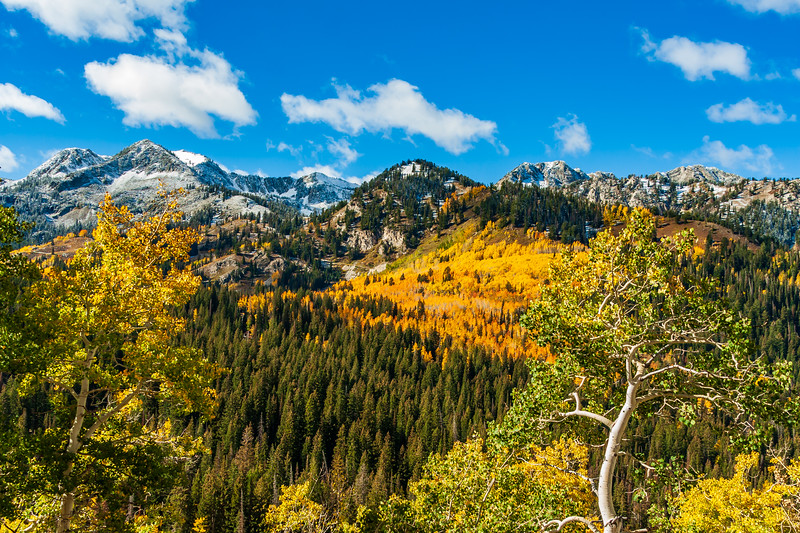 UTAH-WASACTH-CACHE NATIONAL FOREST