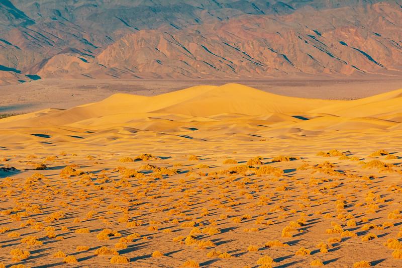 California-Death Valley National Park-Mesquite Flat Sand Dunes at sunrise