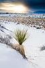 NM-White Sands National Monument-Little Bluestem