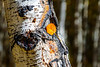 UTAH-UINTA NATIONAL FOREST