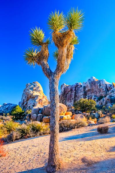 CA-Joshua Tree National Park-Hidden Valley