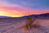 California-Death Valley National Park-Beatty Junction sunrise with creosote bush
