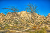 CA-Joshua Tree National Park-Hidden Valley