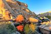 CA-Joshua Tree National Park-Barker Dam with fall reflections