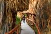 CA- Thousand Palms Oasis Preserve-Coachella Valley Preserve-San Andreas Fault