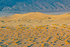 California-Death Valley National Park-Mesauite Flat Sand Dunes at sunrise