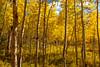 UT-UINTA NATIONAL FOREST
