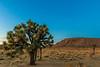 CA-Joshua Tree National Park-Sunset