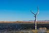 NM-Bosque del Apache National Wildlife Refuge