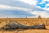 CA-Joshua Tree National Park-Fallen Joshua tree