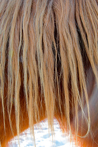 December, 2012 -first light on a frosty 5 degree morning reveals an exhale - and a horse's mane showing winter's wane.