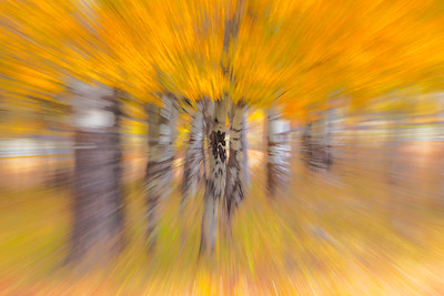 Fall Aspen on-camera motion blur
