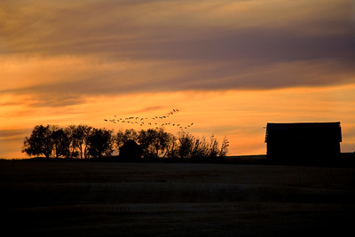 Canadian Geese fly over a deserted barn in Eastern Idaho as a rain cloud threatens.  I saw and heard the geese coming.  I had already set the shot up for the sky and the barn, and they were a bonus to add.