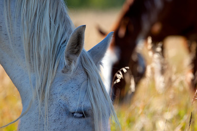 Summer was waning, and the horse's manes were flowing with the last of the summer breeze