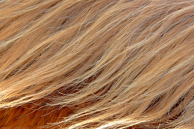 December, 2012 - horse's mane in winter, reflecting early red and yellow light.