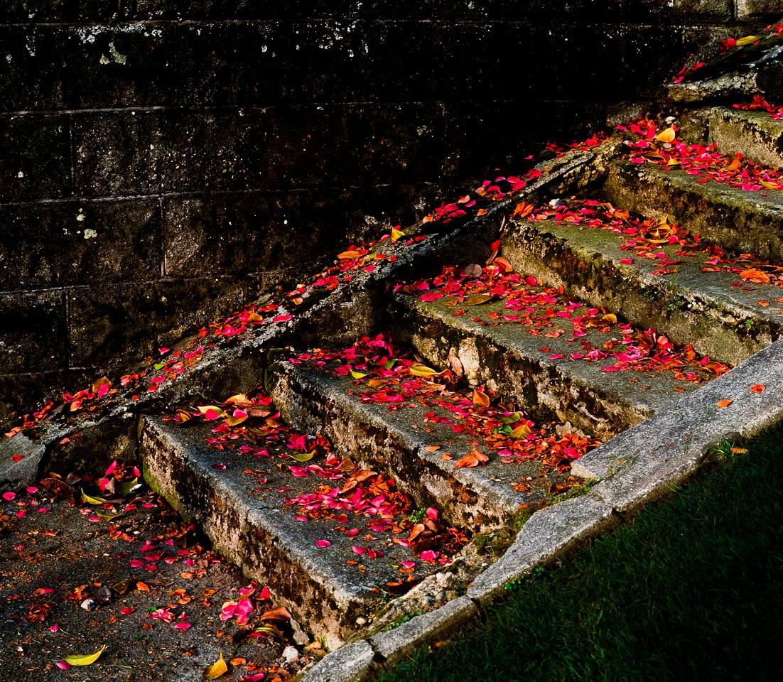 Steps, Seattle, Washington, 1992