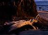 Driftwood, Fitzgerald Marine Reserve, California, 1993