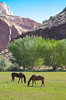 Horses, Capitol Reef National Park, 2000