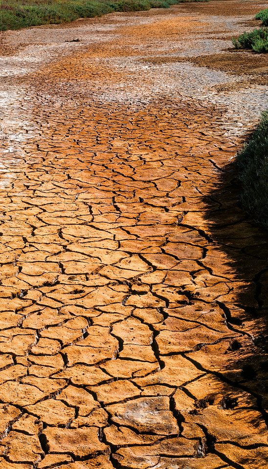 Mud, Baylands Park, Palo Alto, California, 1994