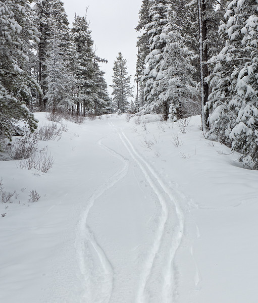 """Powder skiing! A couple of the """"steep hills"""" provided an opportunity to fire off a few telemark turns."""